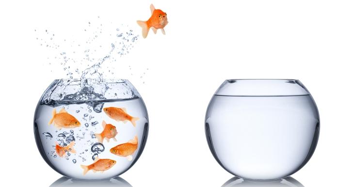 goldfish break free escape